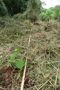 plantación en fajas