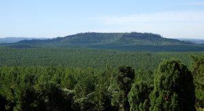 Arauco Argentin Gestion Forestal