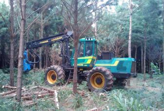 Servicio Forestal 3