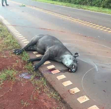 tapir1-5lf3g8pr2bj0