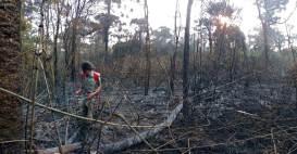 Incendio en el Parque Araucaria (9)