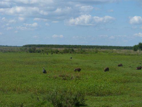 Corrientes Forestacions y Humedales