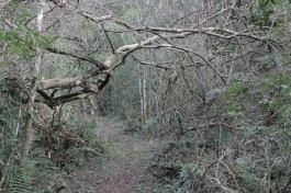 Reserva Yvytu 3 (1)
