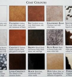 polo supplier linkshorse color chart [ 1035 x 828 Pixel ]