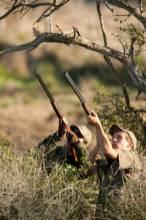 Hunting doves in Argentina