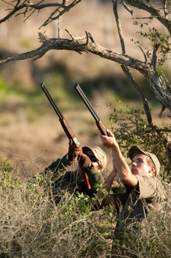Hunting doves in Argentina