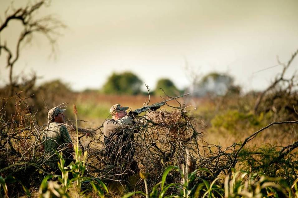 Hunting doves at Malalcue
