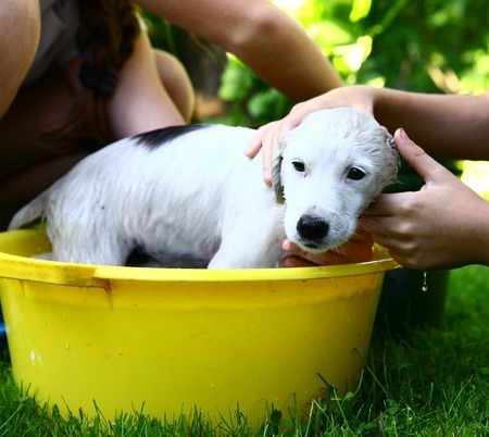 how to bathe a puppy right way