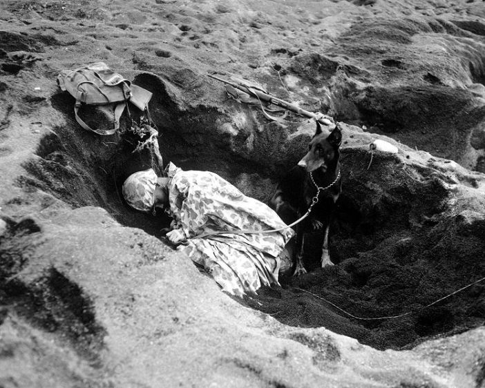 A Marine with the 7th War Dog Platoon, 25th Marine Regiment, takes a nap while Butch, his war dog, stands guard. Iwo Jima, February 1945.