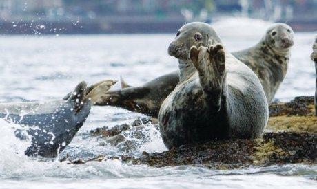 Wildlife Cruise|Scotland Wildlife|Argyll Cruising|Argyll