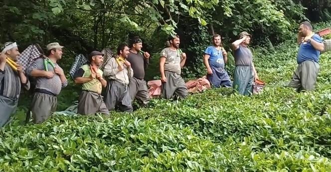 Çay İşçiliğinin Yevmiyesi Artınca Bahçelerde Çalışma Talebi Çoğaldı