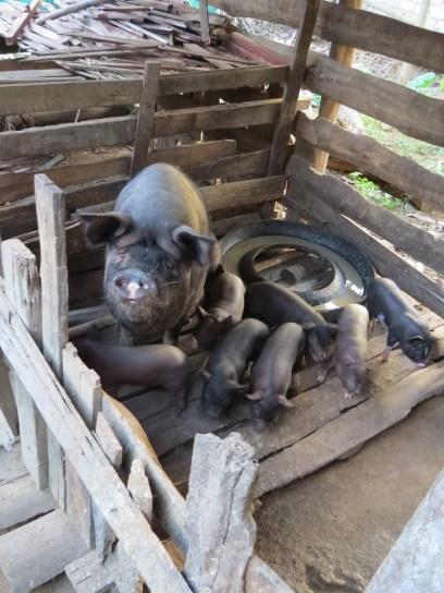 Pigpen at Htilo's home