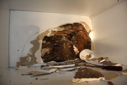 resultat termites diagnostic termites insecte xylophage