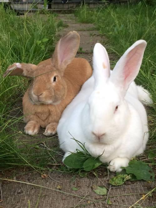 Photo de Boris et Charlotte les lapins
