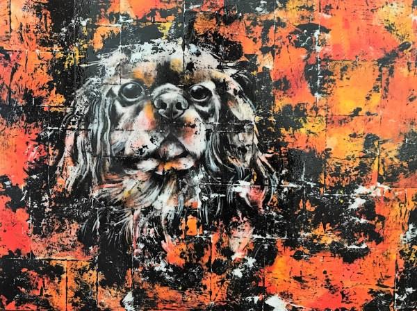 Portrait de Bracken le chien