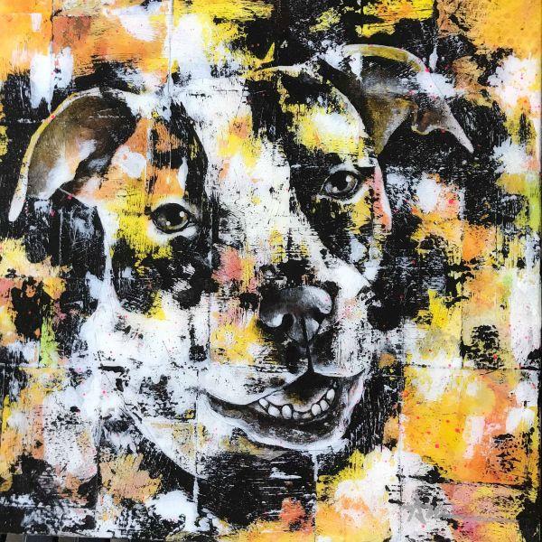 Portrait de Maya le chien