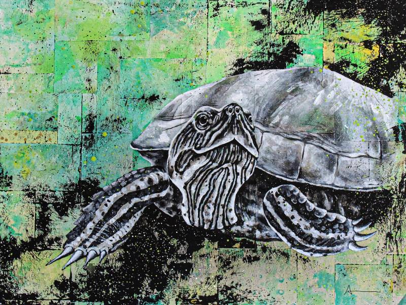 Portrait de Réjean (tortue)