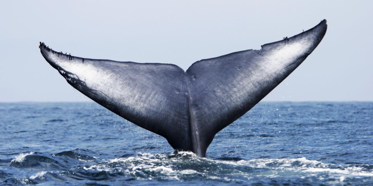 La storia della Blue Whale vista dagli occhi di una mamma preoccupata  Arianna Chieli