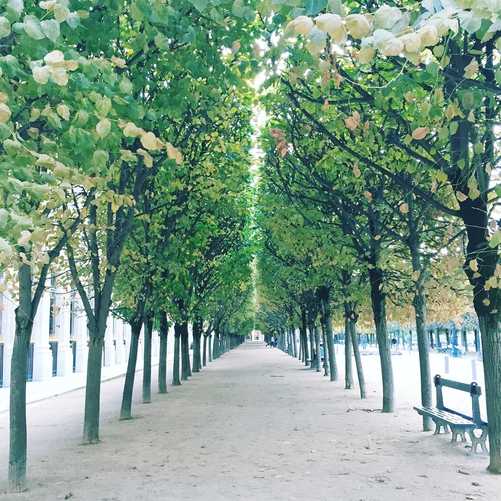 Jardin du Palais Royal - possibly my favourite garden in Paris!