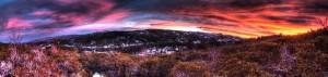 uglytree-Panorama1
