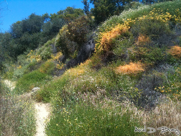 Hiking past orange parasitic plants