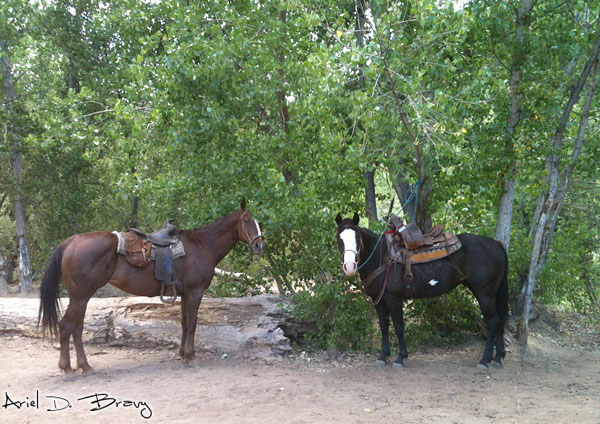 Horses on the Trail