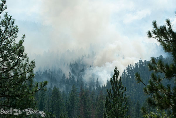 Forest fire in Kings Canyon NP