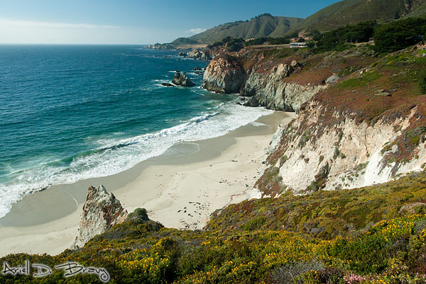 Wildflowers and a beach along the coast of Big Sur