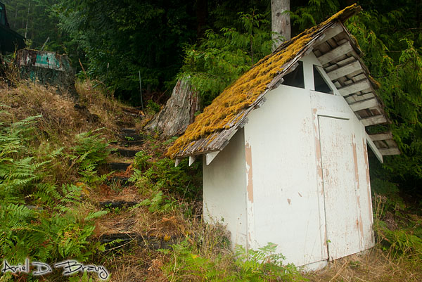 Mossy roof on the shed