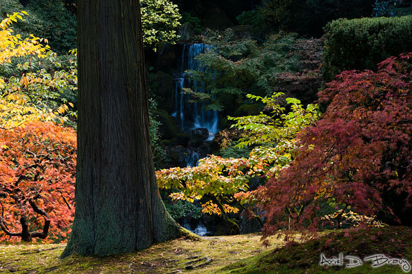 Waterfall and colors in Portland's Japanese Garden