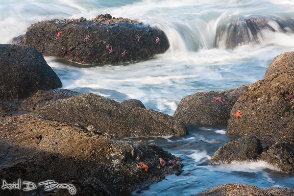 A bunch of starfish hanging out in the tidepools
