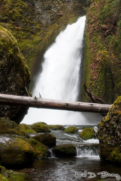 A log lays in front of Wahclella Falls