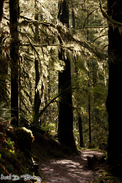 Sweet mossy trees, vertical