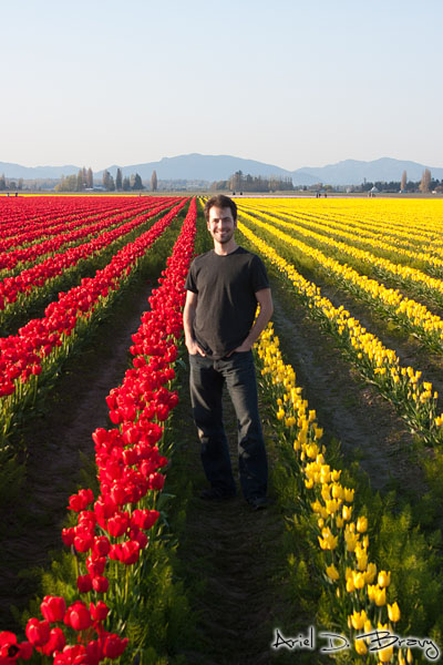 Ariel in the red and yellow tulips