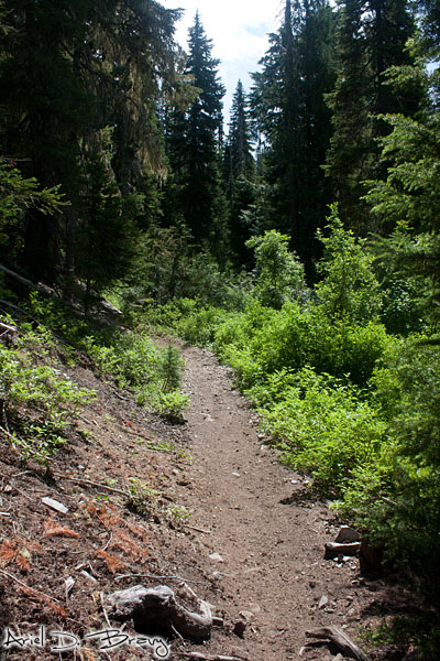 Some typical trail