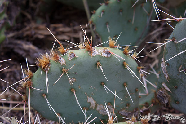 These cacti had two kinds of spikes, the single long ones and the tiny shorter ones
