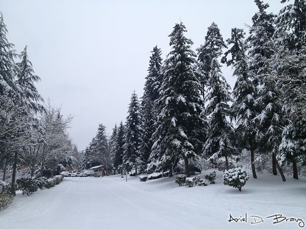 Beautiful snow-covered trees
