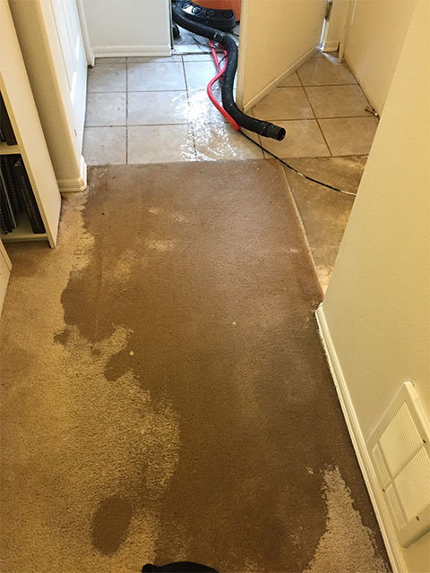 Flooding by front door, trying to vacuum away the water to minimize the damage