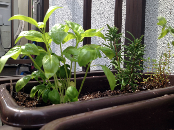 Planting vegetables and herbs on an apartment balcony in Shinjuku, Tokyo