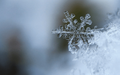 Surviving the Winter of COVID-19