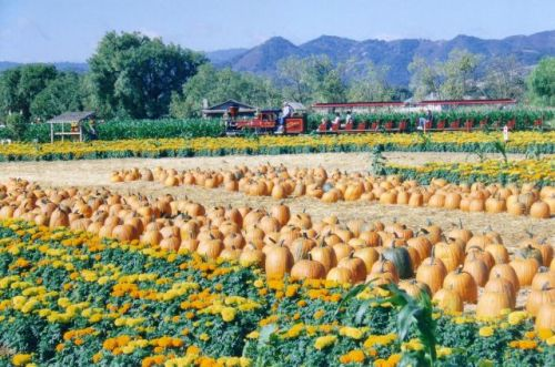 Uesugi Farms