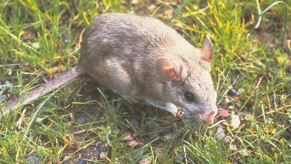 Got Pack Rats? Get Rid-a-Rat! | Arizona Edventures