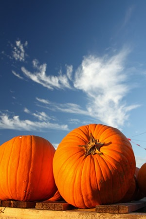 Top Pumpkin Patches in Phoenix