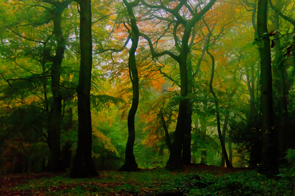 Dreamtime: Autumn in Warley Woods