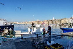 Marseille Port - Fish Market
