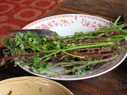Thai Market - spiky veg, just eat the young fronds