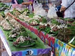 Thai Market - Mushrooms and jungle veg, preselected trays