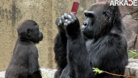 Gorila tenta jogar DSi XL que menino derrubou em viveiro