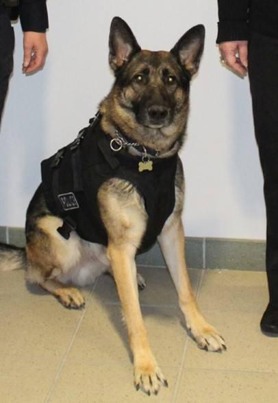 Jonesboro officer shoots police dog during training