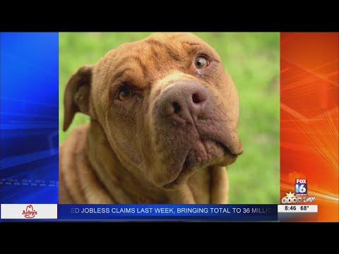 Watch: Fursday: Little Rock Animal Village